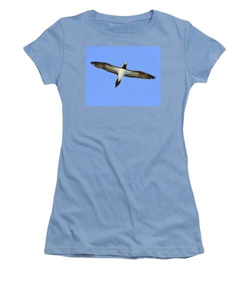 Brown Booby Women's T-Shirt (Junior Cut) by Tony Beck