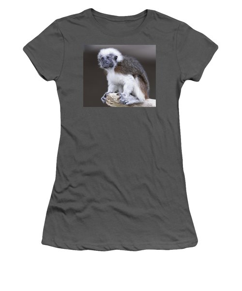 Women's T-Shirt (Junior Cut) featuring the photograph Cotton Top Tamarin by Shoal Hollingsworth