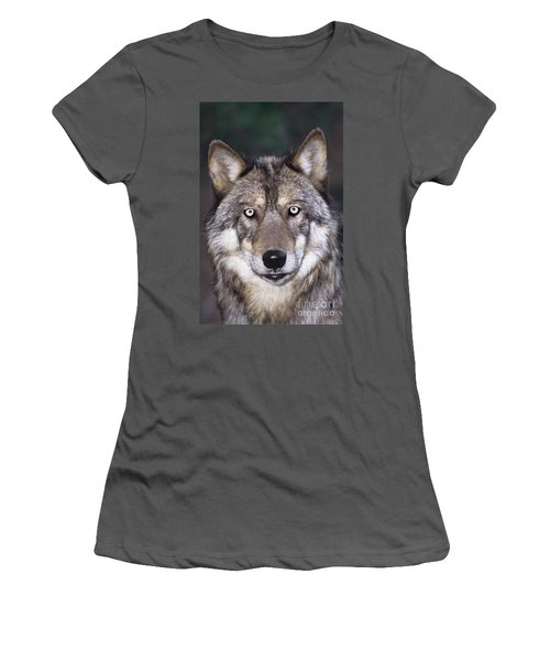Gray Wolf Portrait Endangered Species Wildlife Rescue Women's T-Shirt (Junior Cut) by Dave Welling