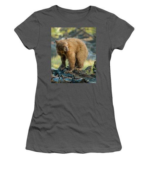Black Bear Women's T-Shirt (Junior Cut) by Doug Herr