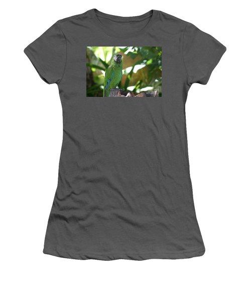 Curacao Parrot Women's T-Shirt (Athletic Fit)