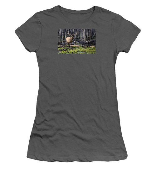 Elk In The Woods Women's T-Shirt (Athletic Fit)