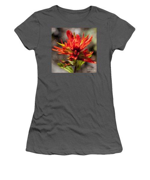 Indian Paintbrush Women's T-Shirt (Junior Cut) by Belinda Greb