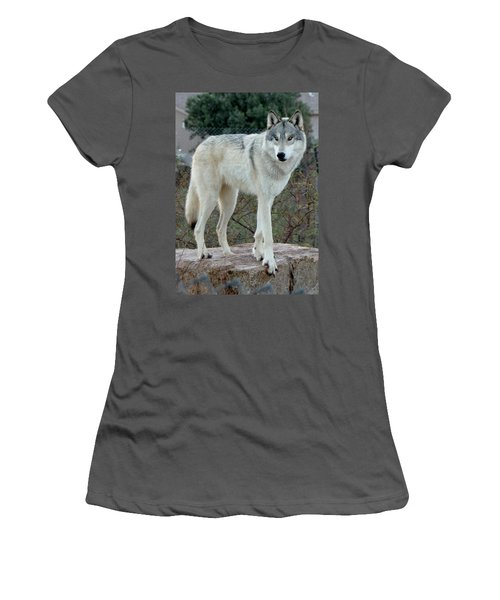 Out Of Africa Wolf  Women's T-Shirt (Athletic Fit)