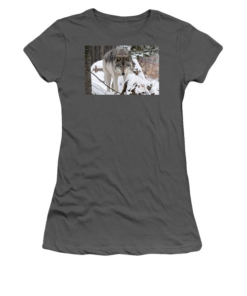 Women's T-Shirt (Junior Cut) featuring the photograph Winter Timber Wolf by Wolves Only