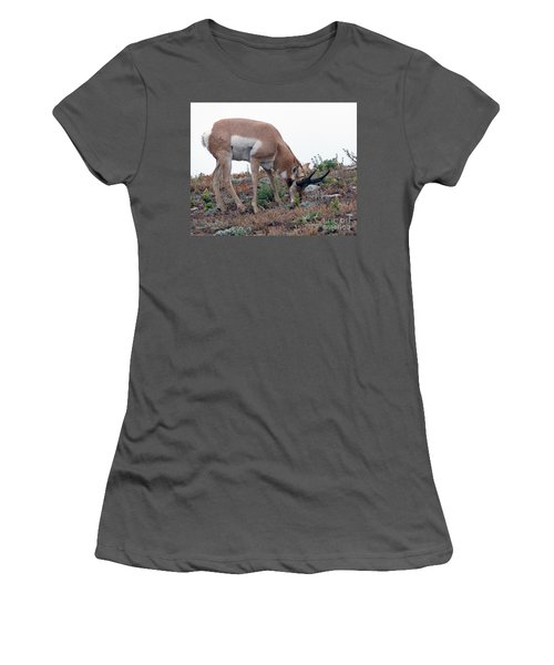 Antelope Grazing Women's T-Shirt (Junior Cut) by Art Whitton