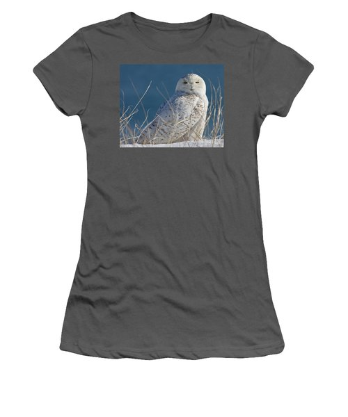Snowy Owl Profile Women's T-Shirt (Athletic Fit)