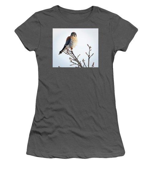 American Kestrel At Bender Women's T-Shirt (Athletic Fit)
