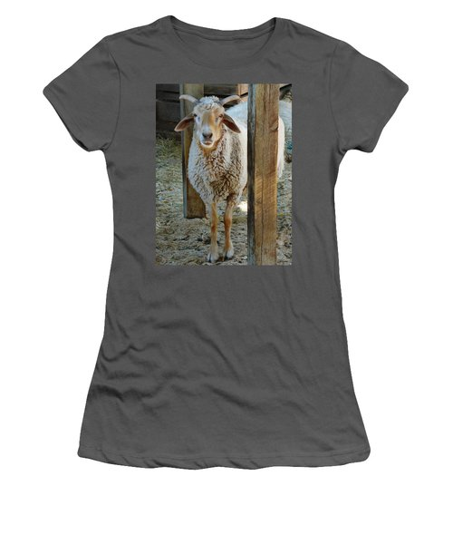 Awassi Sheep Women's T-Shirt (Athletic Fit)