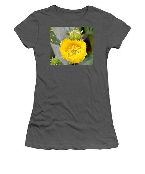 Beauty Begets Beauty Women's T-Shirt (Athletic Fit)