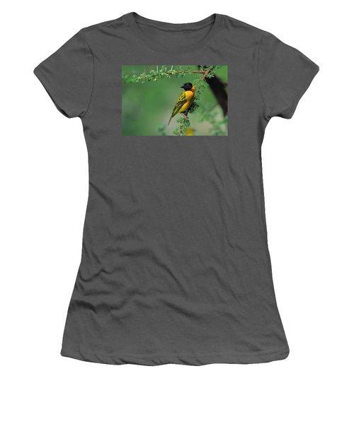 Black-headed Weaver Women's T-Shirt (Athletic Fit)