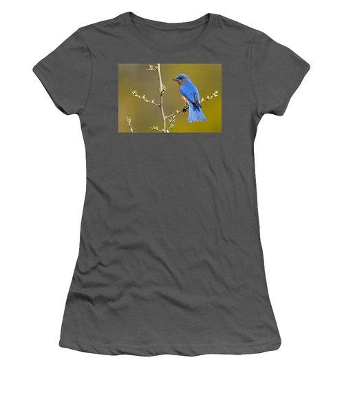 Bluebird Bliss Women's T-Shirt (Athletic Fit)