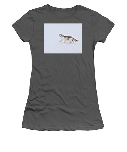 Calico Huntress Women's T-Shirt (Athletic Fit)
