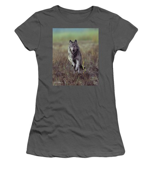 Canis Lupus Women's T-Shirt (Junior Cut) by Tim Fitzharris