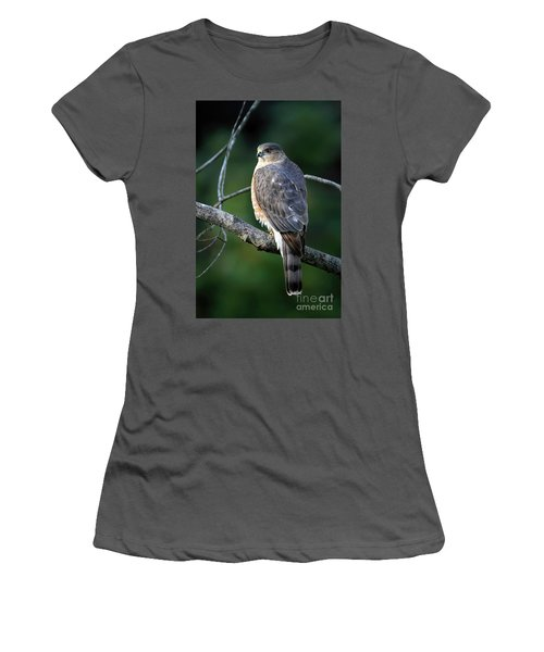Handsome Sharp Shinned Hawk Women's T-Shirt (Athletic Fit)