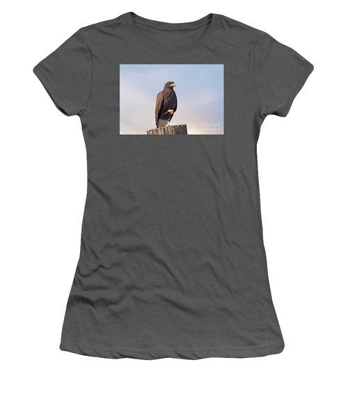 Harris Hawk - Birds Women's T-Shirt (Junior Cut) by Anne Rodkin
