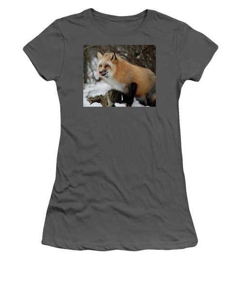 Women's T-Shirt (Junior Cut) featuring the photograph Hungry Fox by Richard Bryce and Family