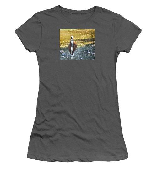 Women's T-Shirt (Junior Cut) featuring the photograph Llama Cuteness by Theresa Tahara