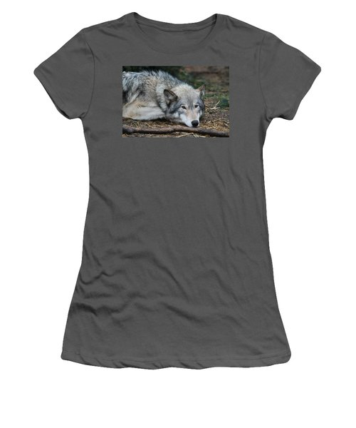 Women's T-Shirt (Junior Cut) featuring the photograph Lying In Wait by Laddie Halupa