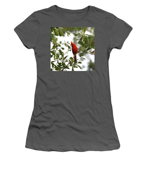 Northern Cardinal - In The Wind Women's T-Shirt (Athletic Fit)