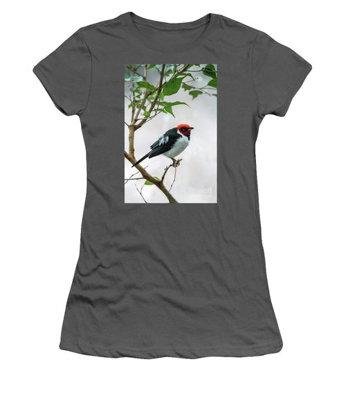 Red Capped Cardinal 2 Women's T-Shirt (Athletic Fit)