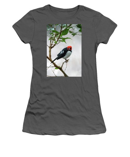Red Capped Cardinal Women's T-Shirt (Athletic Fit)
