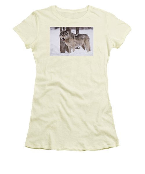 Timber Wolf In Winter Women's T-Shirt (Athletic Fit)