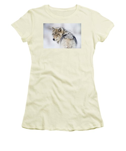 Timber Wolf Pictures Women's T-Shirt (Athletic Fit)
