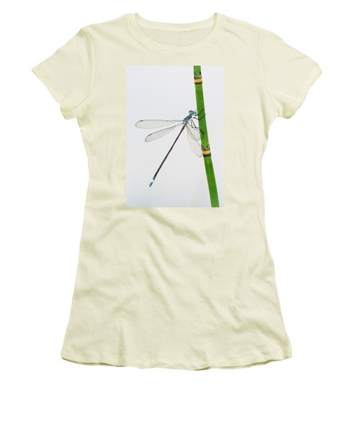 Damselfly On Horsetail Women's T-Shirt (Athletic Fit)