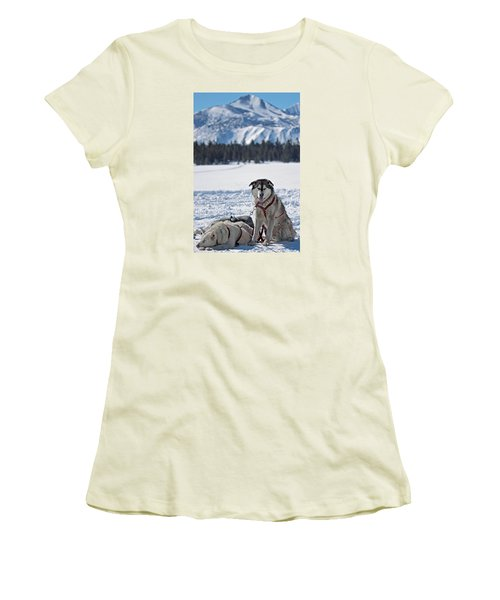 Women's T-Shirt (Junior Cut) featuring the photograph Dog Team by Duncan Selby