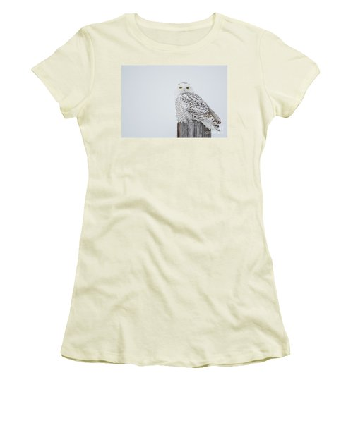 Snowy Owl Perfection Women's T-Shirt (Athletic Fit)