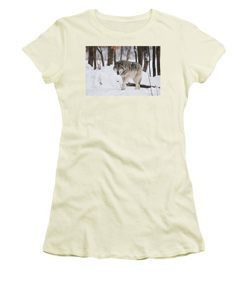 Women's T-Shirt (Junior Cut) featuring the photograph Timber Wolf In Winter Forest by Wolves Only