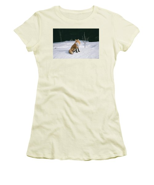 Women's T-Shirt (Junior Cut) featuring the photograph Winter Fox by David Porteus