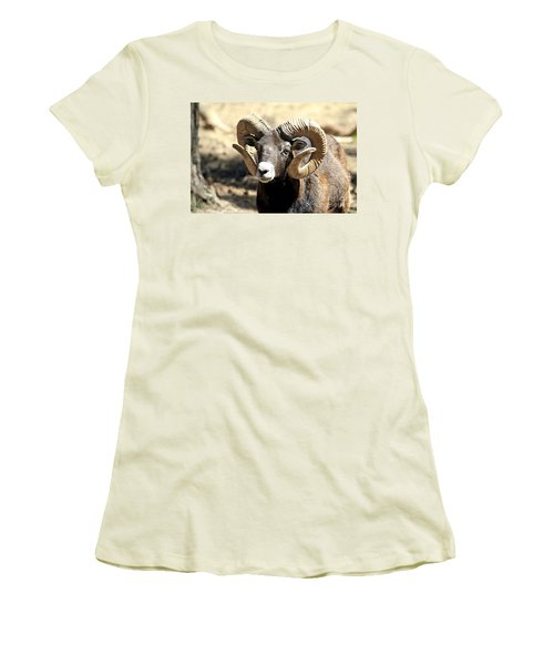 European Big Horn - Mouflon Ram Women's T-Shirt (Junior Cut) by Teresa Zieba