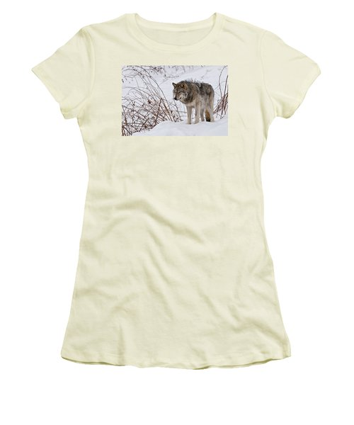 Women's T-Shirt (Junior Cut) featuring the photograph Timber Wolf In Winter by Michael Cummings