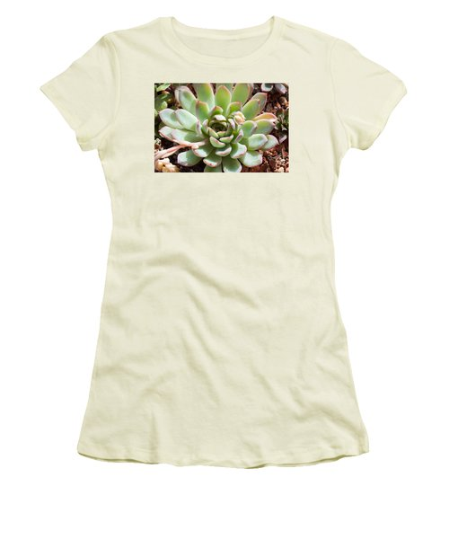 Women's T-Shirt (Junior Cut) featuring the photograph A Young Succulent Plant by Catherine Lau