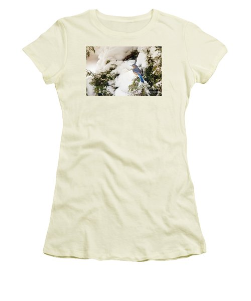 Women's T-Shirt (Junior Cut) featuring the photograph Bluebird On Snow-laden Cedar by Robert Frederick