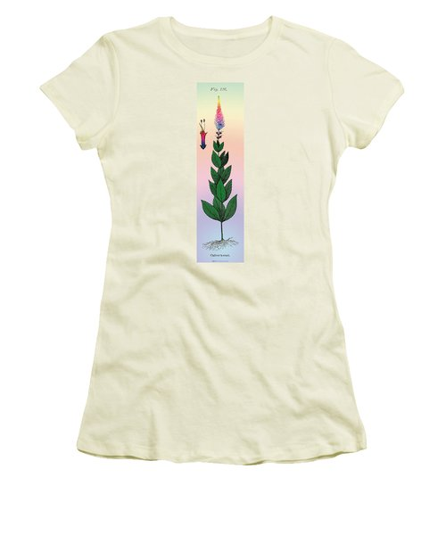 Culvers Root Women's T-Shirt (Junior Cut) by Eric Edelman