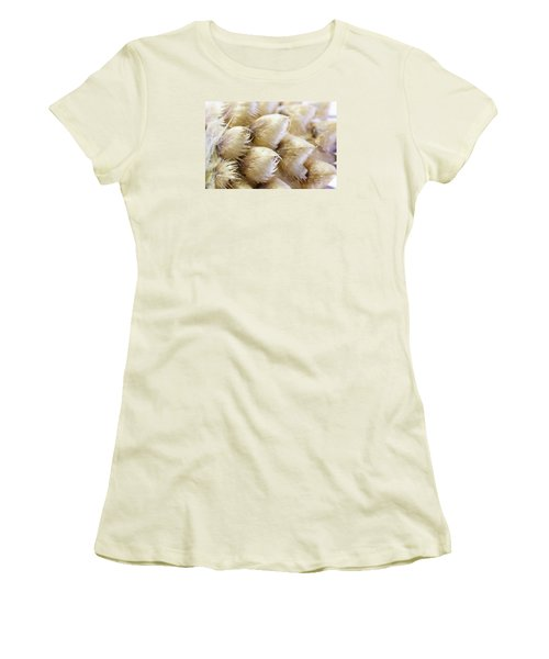 Globe Cornflower Seed Heads - Macro Women's T-Shirt (Athletic Fit)