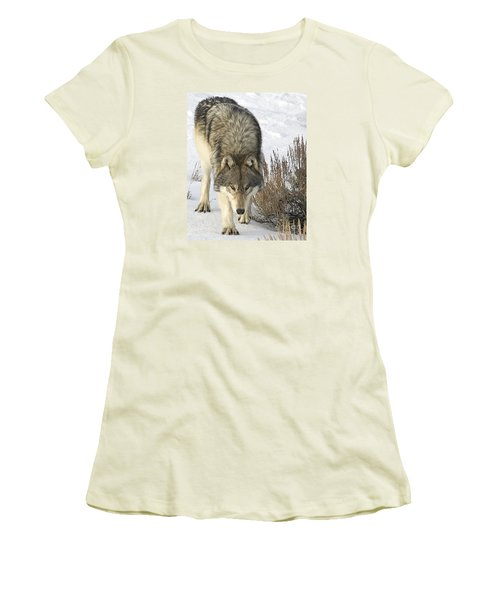 Gray Wolf Women's T-Shirt (Athletic Fit)
