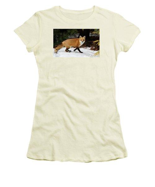 Women's T-Shirt (Junior Cut) featuring the photograph Mr Fox by Mircea Costina Photography