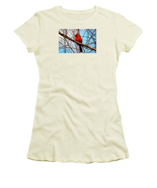 Red Bird Sitting Patiently Women's T-Shirt (Athletic Fit)