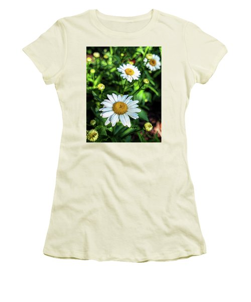 Shasta Daisy Women's T-Shirt (Junior Cut) by Robert FERD Frank