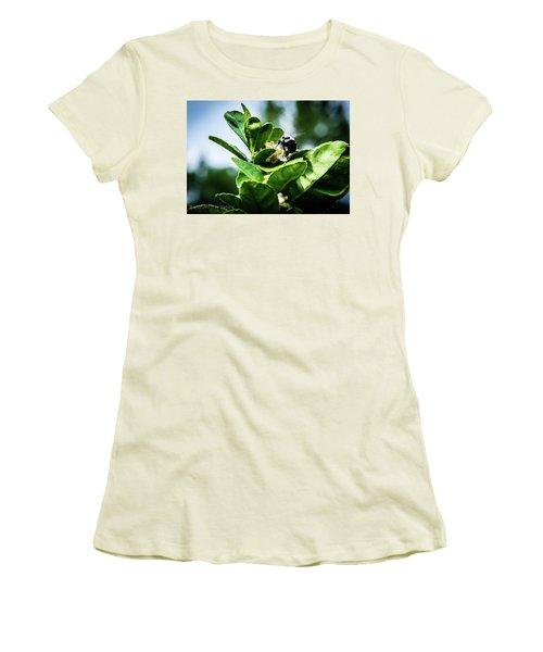 Sweet Bee Women's T-Shirt (Junior Cut) by Stefanie Silva