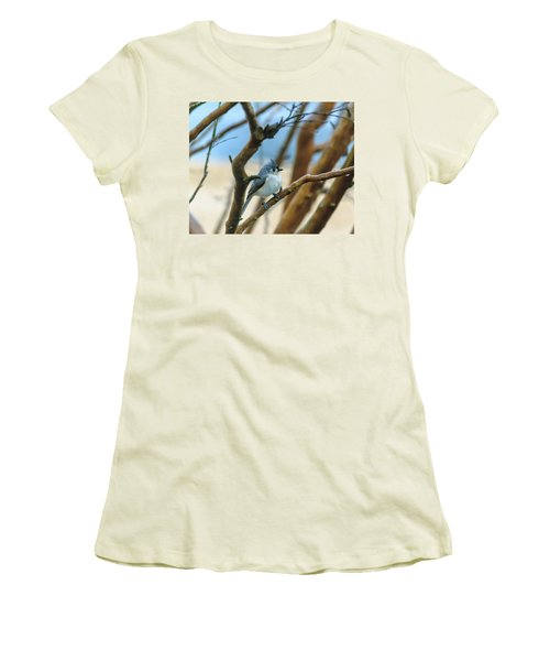 Tufted Titmouse In Tree Women's T-Shirt (Athletic Fit)