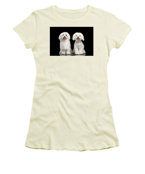 Two Happy White Maltese Dogs Sitting, Looking In Camera Isolated Women's T-Shirt (Junior Cut) by Sergey Taran