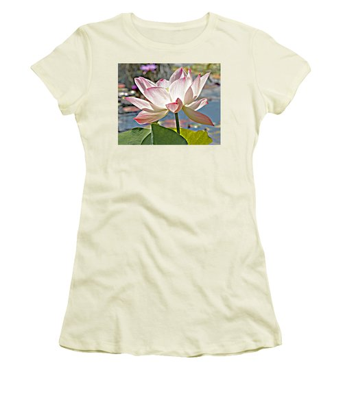 Water Lily Women's T-Shirt (Junior Cut) by Catherine Alfidi