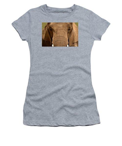 African Elephant Women's T-Shirt