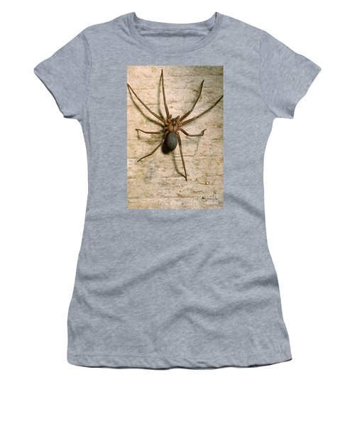Brown Recluse Spider Women's T-Shirt