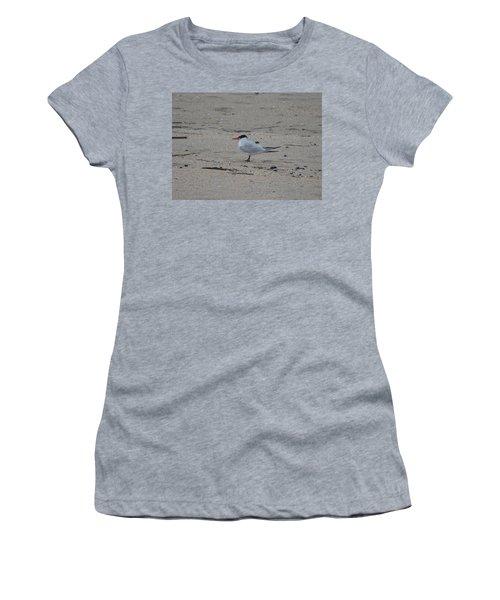 Women's T-Shirt (Junior Cut) featuring the photograph Caspian Tern by James Petersen